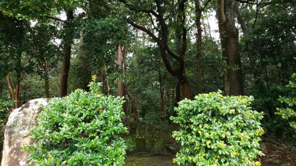 奥石神社の自然