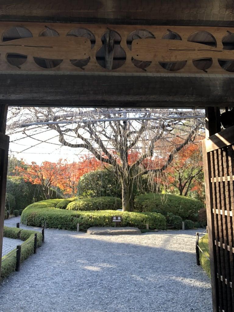 退蔵院の山門