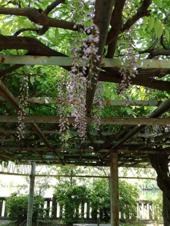 武蔵第六天神社の庭園