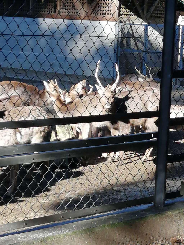 鹿島神宮の動物