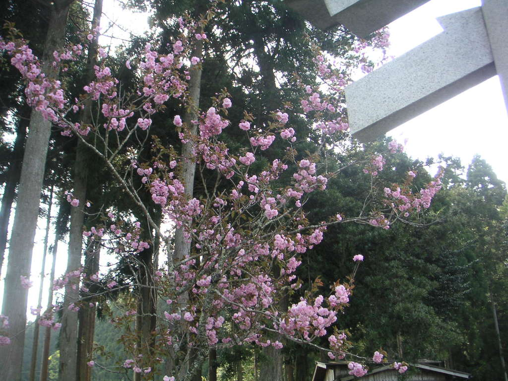 志子淵神社の自然