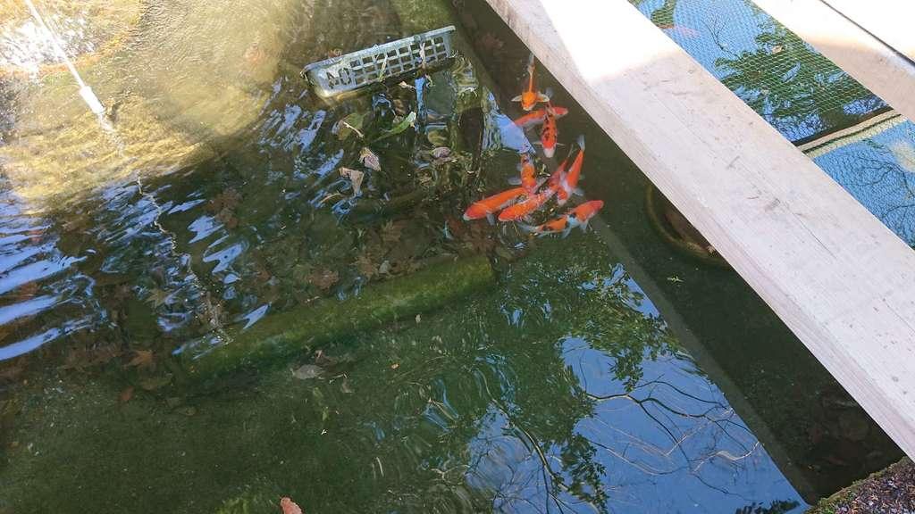 賀茂別雷神社の庭園