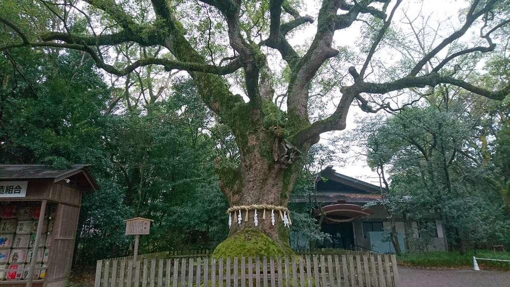 熱田神宮の自然