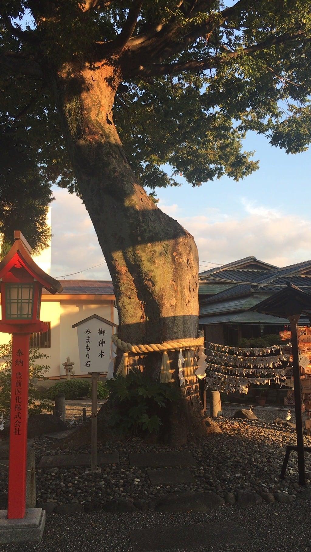 稲積神社の自然