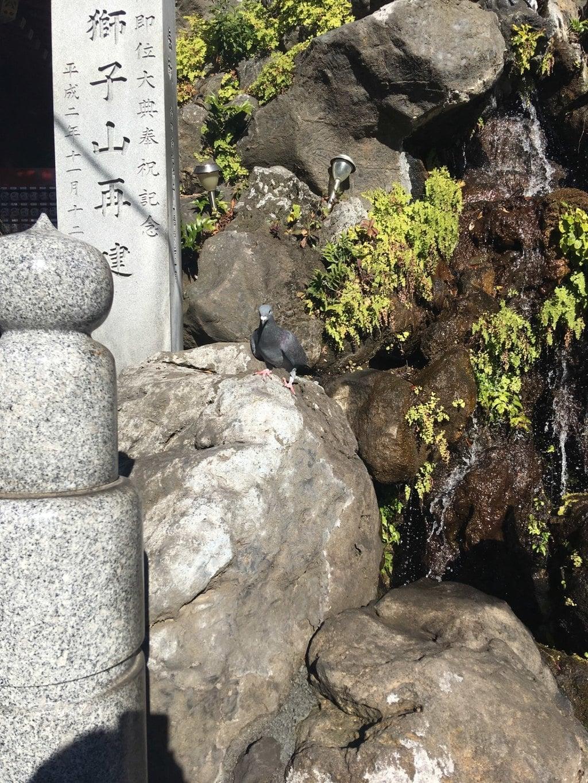 神田神社(神田明神)の動物
