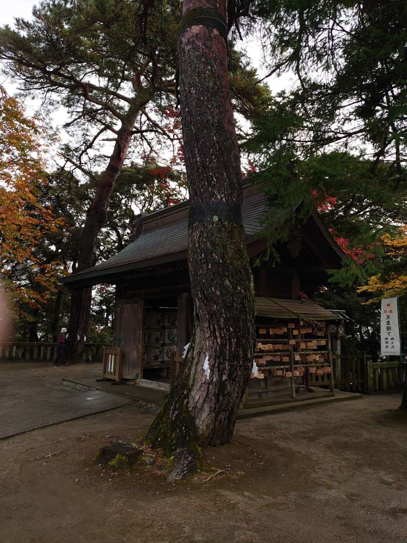 唐澤山神社の自然