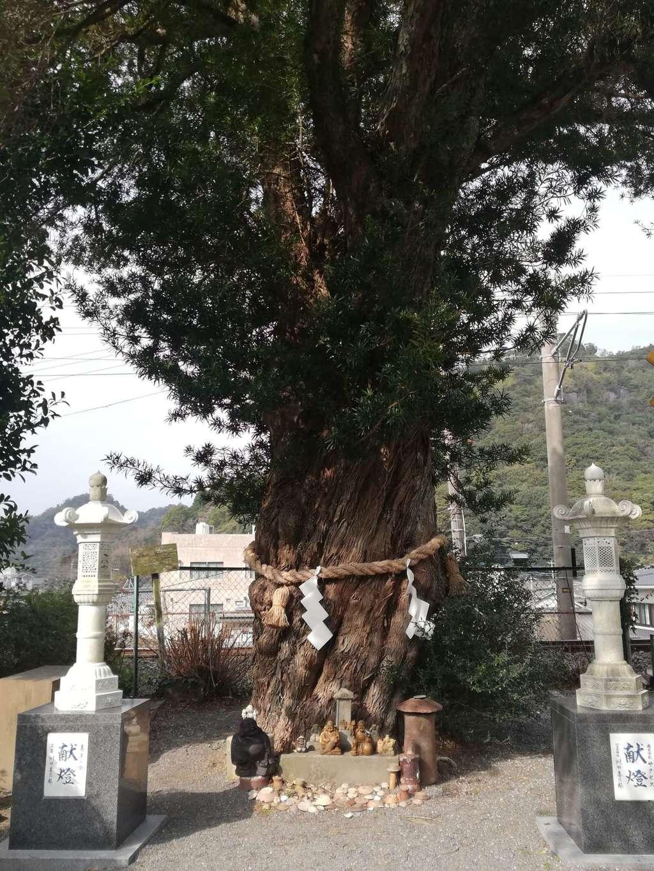陶山神社の自然