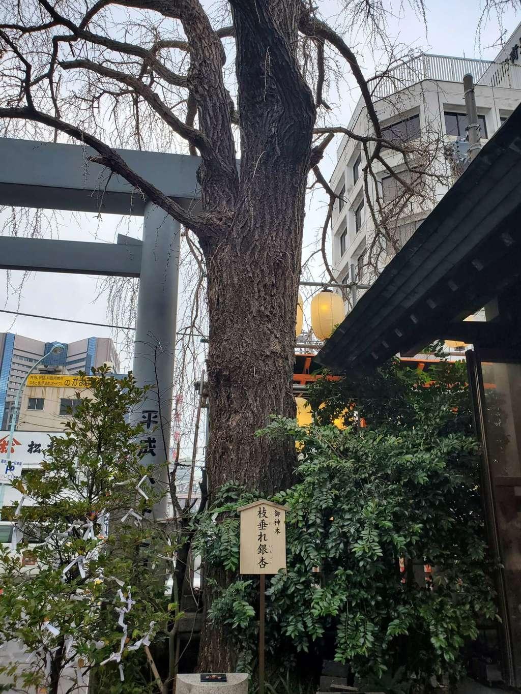 波除稲荷神社の自然