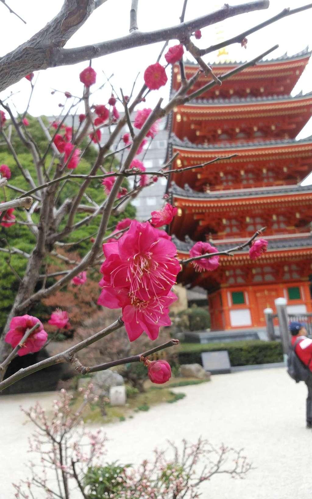 東長寺の自然