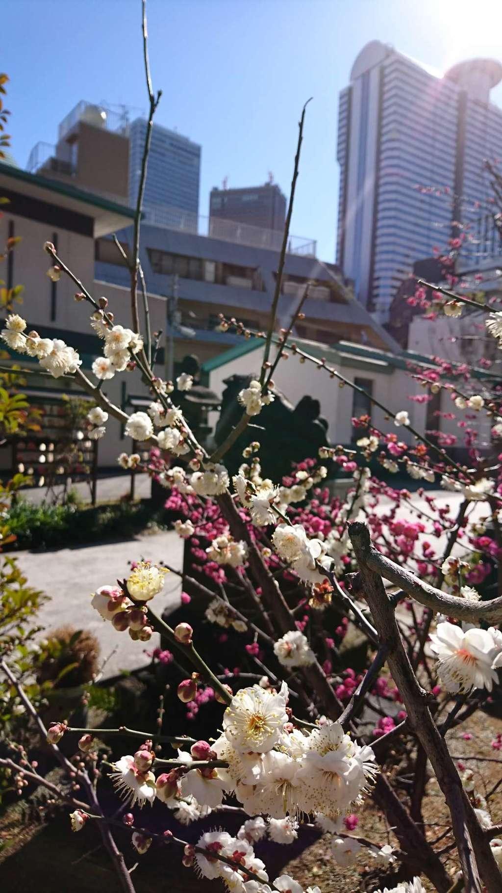 成子天神社の自然