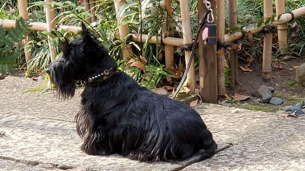 金王八幡宮の動物