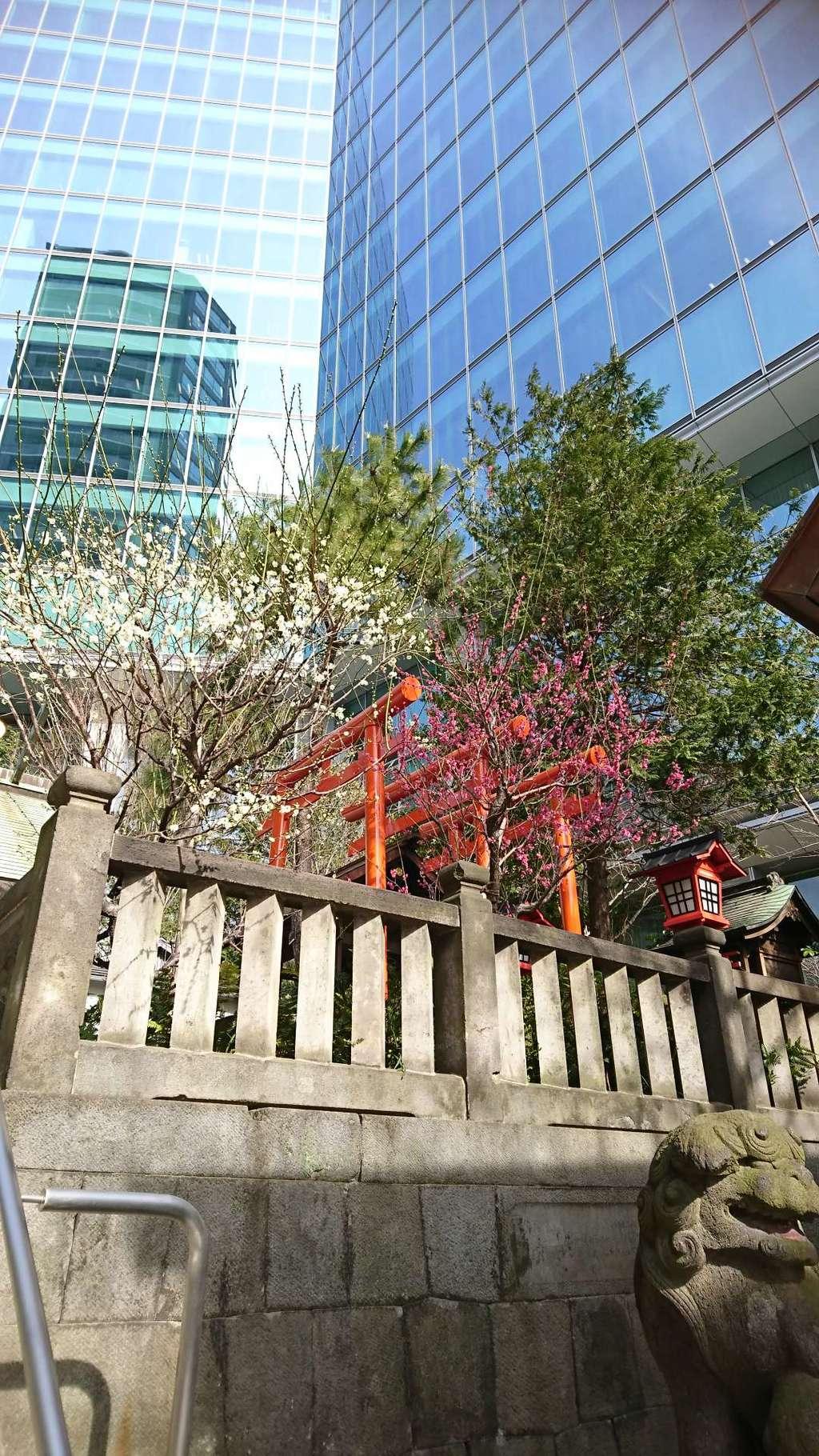 六本木天祖神社の自然