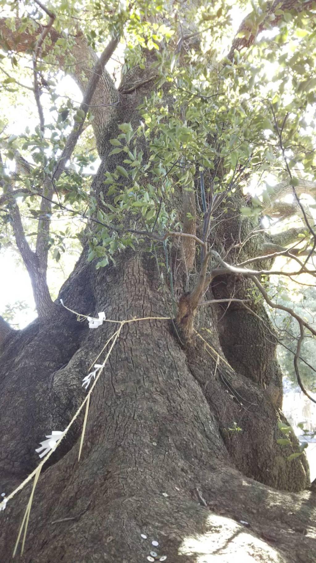 西光寺の自然
