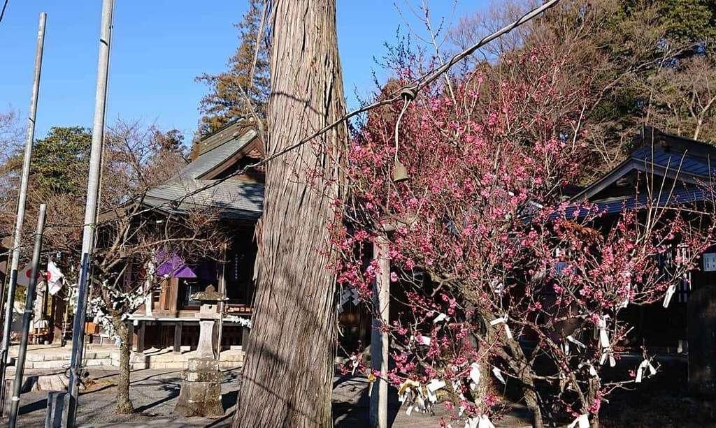賀茂別雷神社の自然