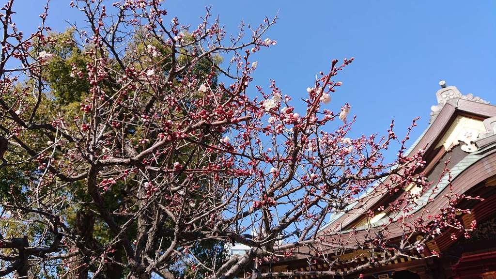 湯島天満宮の自然