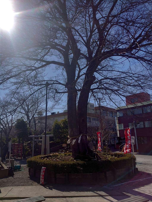 鎮守氷川神社の自然
