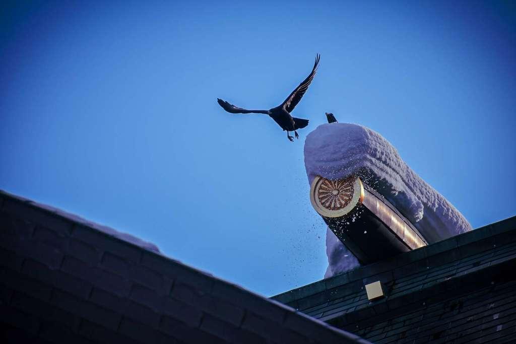 北海道神宮の動物