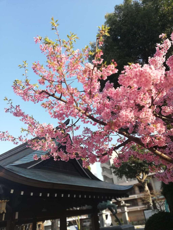 櫛田神社の自然
