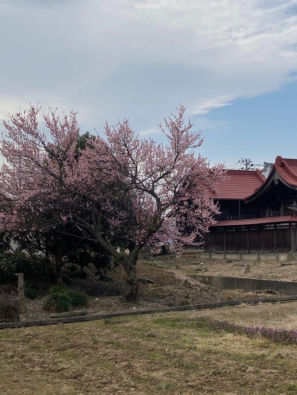 香取神社の自然