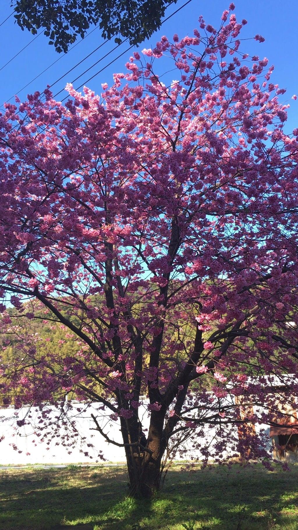 杉桙別命神社の自然