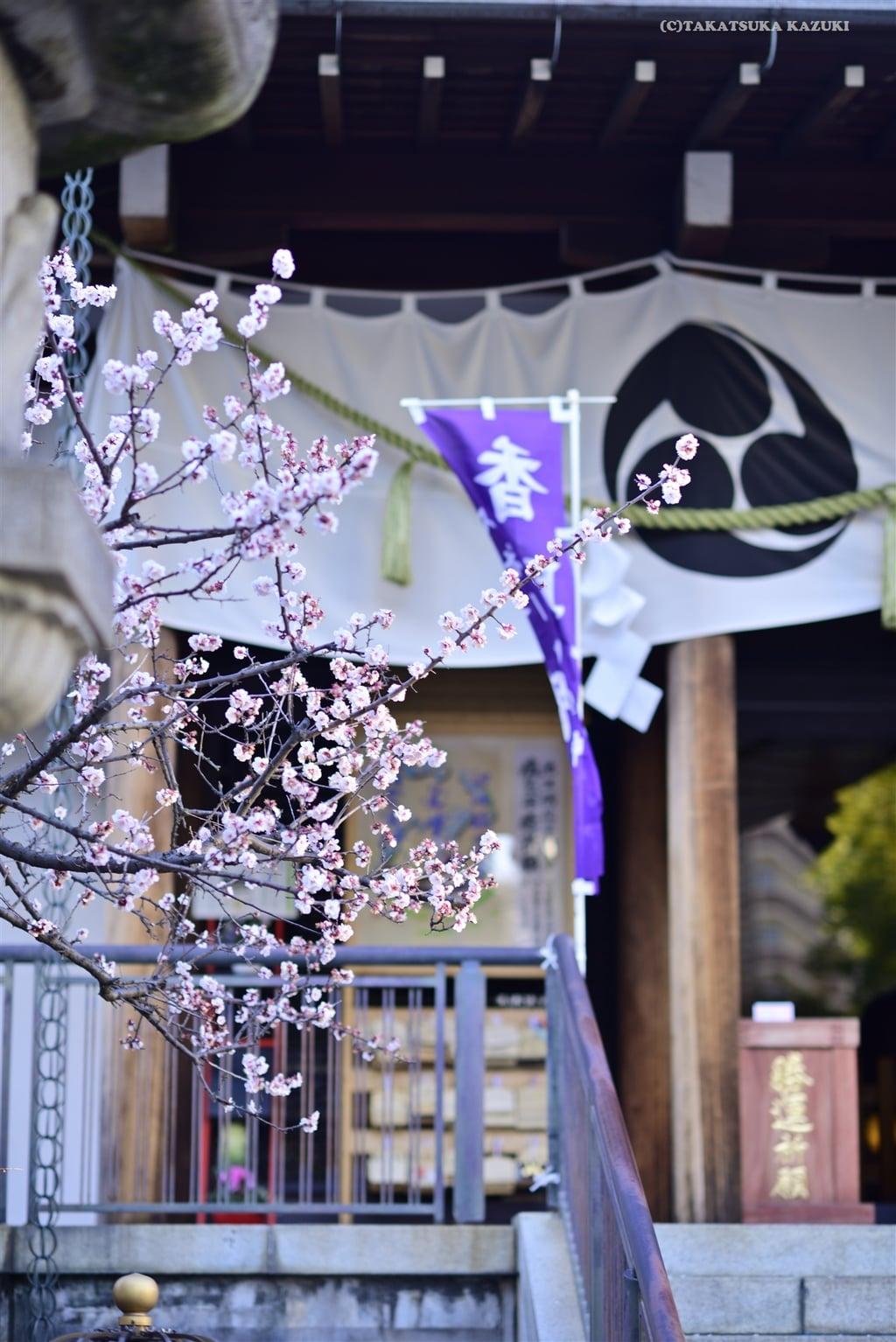亀戸香取神社の自然