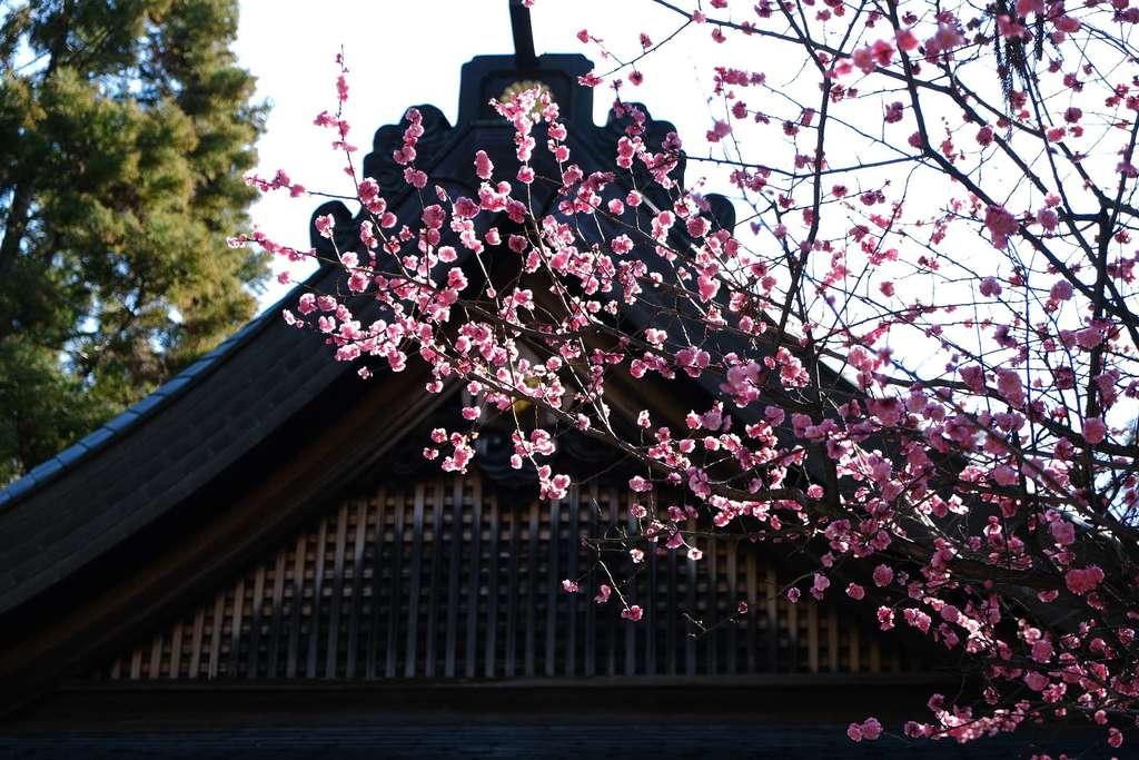 枚岡神社の自然