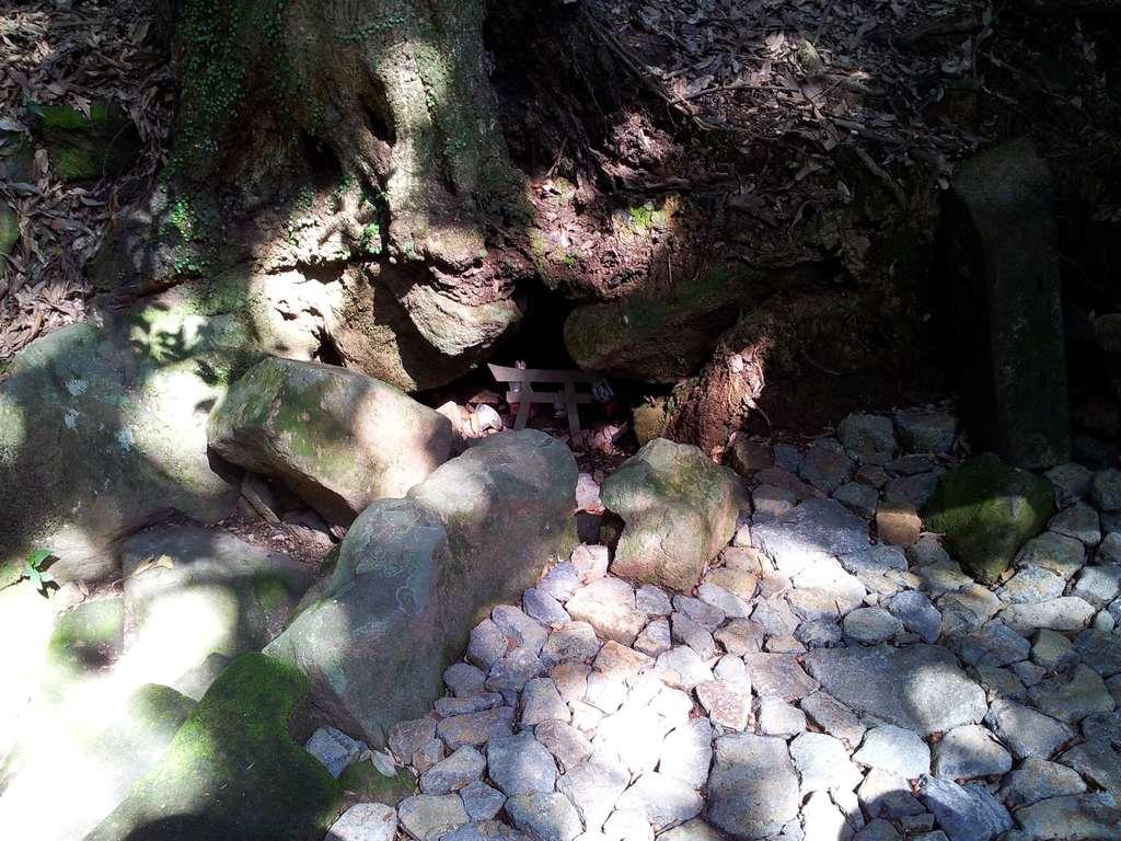 鹿児島神宮の自然