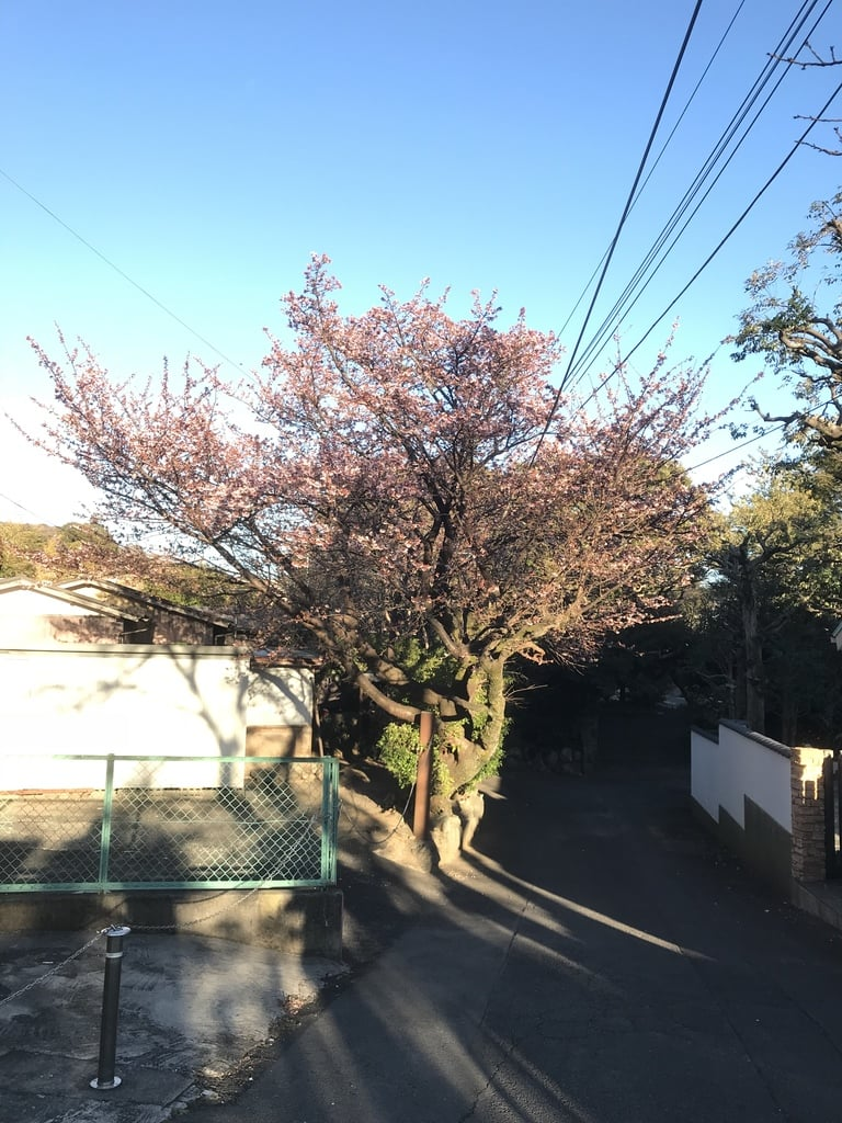 伊豆山神社の自然