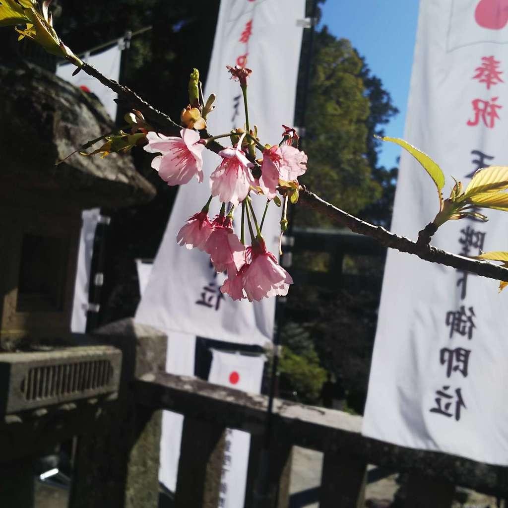 久能山東照宮の自然