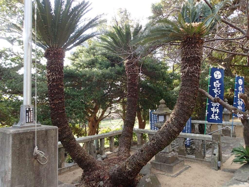 白沙八幡神社の庭園
