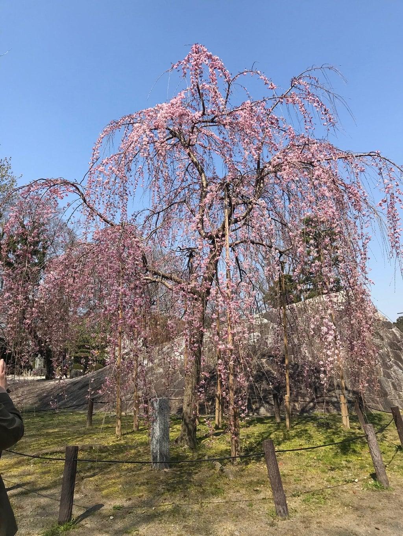 龍城神社の自然