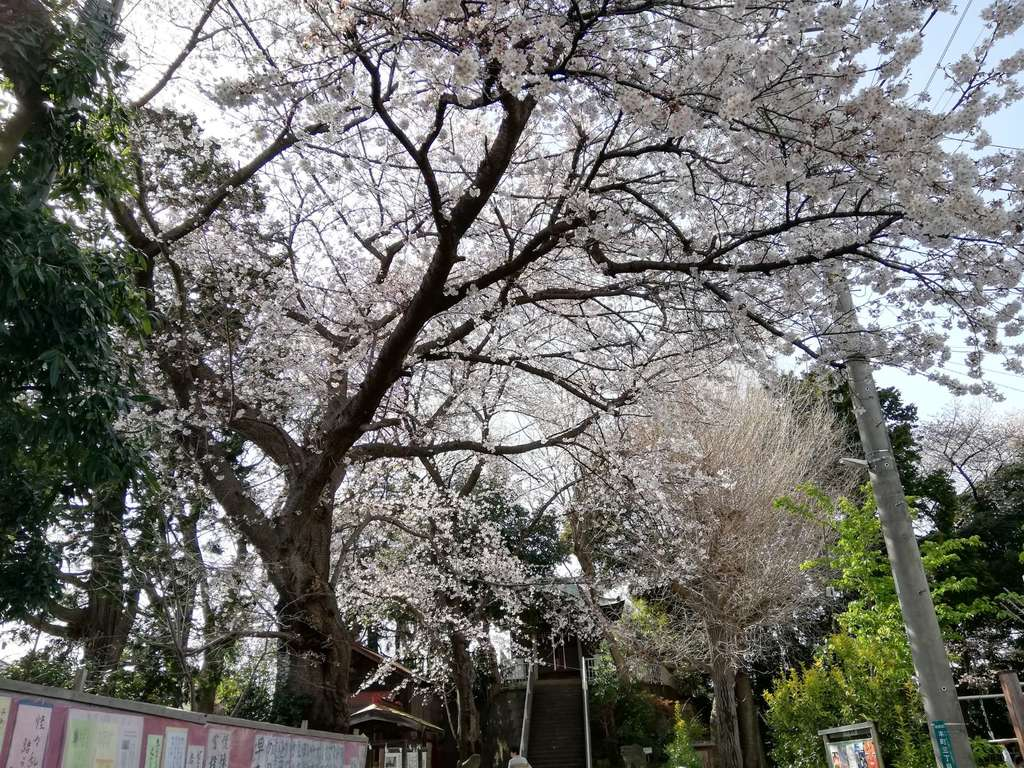 愛宕神社の自然