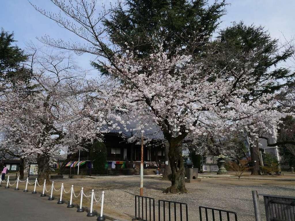寛永寺の自然