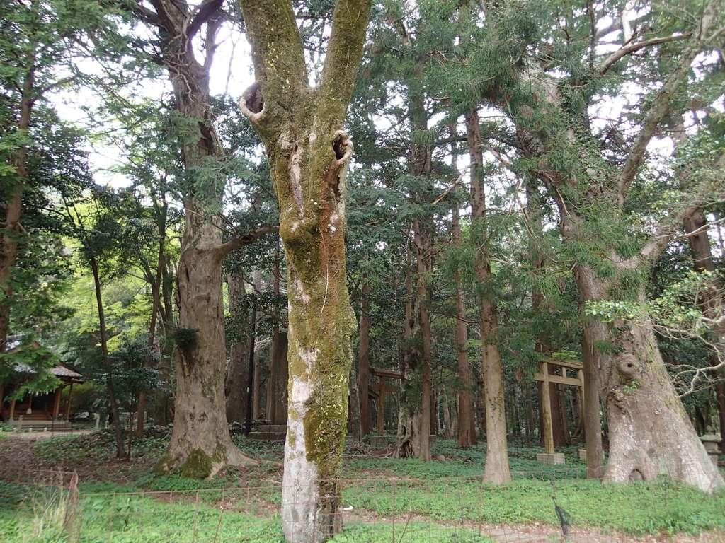 太祝詞神社の自然