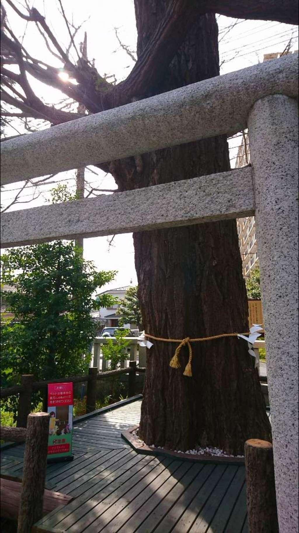 朝日氷川神社の自然