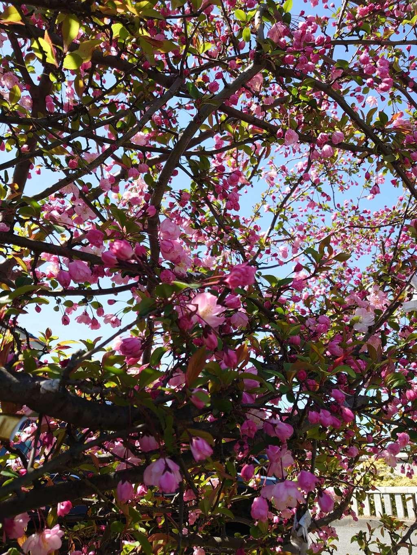 赤羽八幡神社の自然