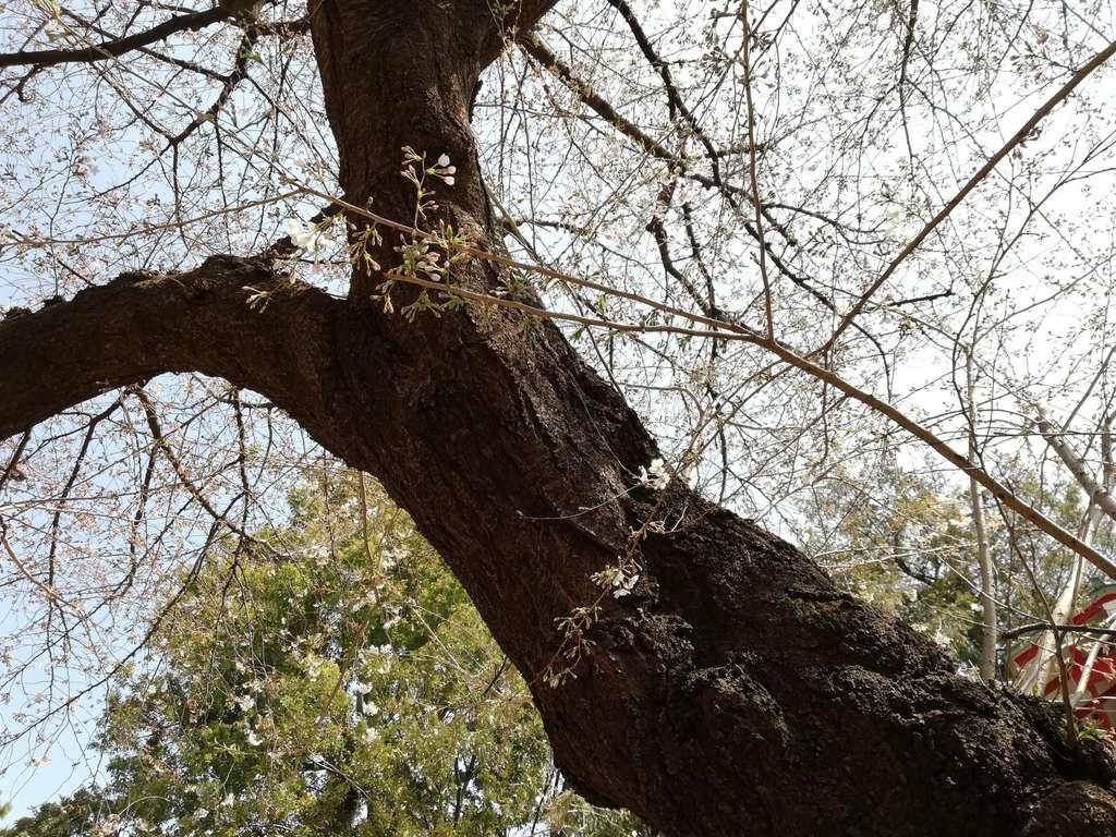 居木神社の自然