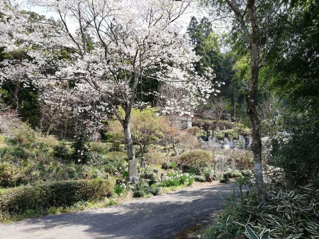 普濟寺の自然