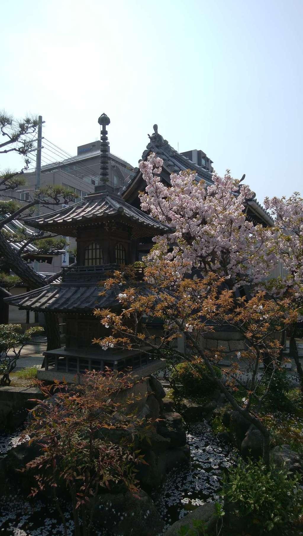 圓通寺の塔