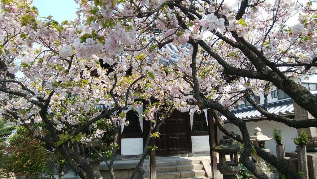 圓通寺の自然