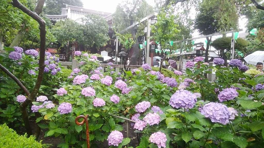 白山神社の自然
