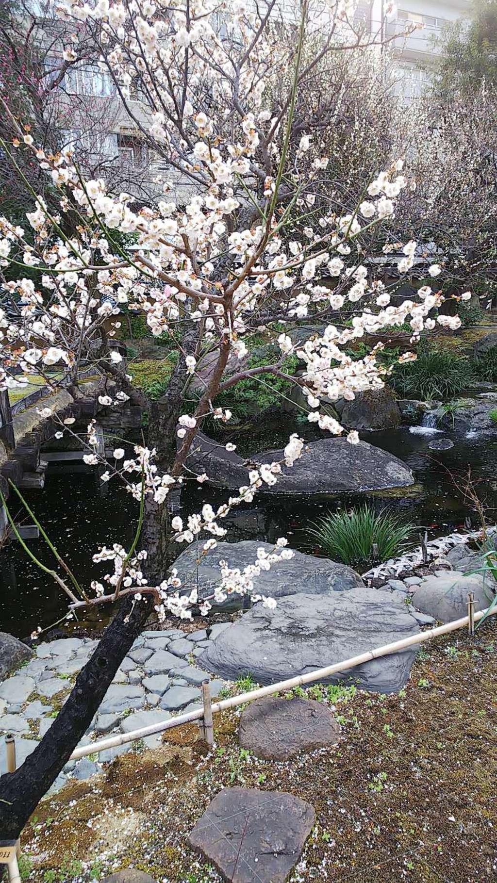 湯島天満宮の庭園