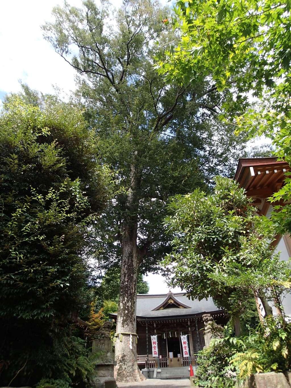 青渭神社の自然