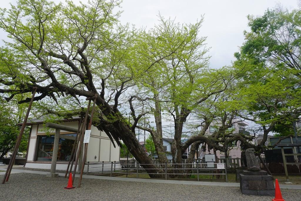 豊受神社の庭園