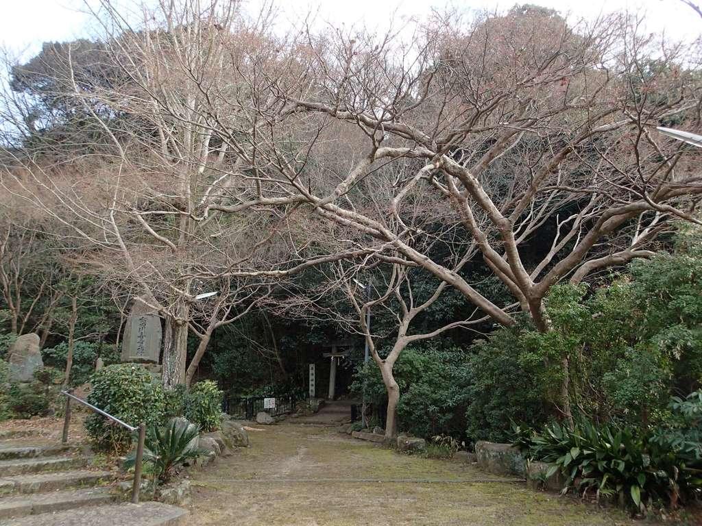 若倭姫神社の自然