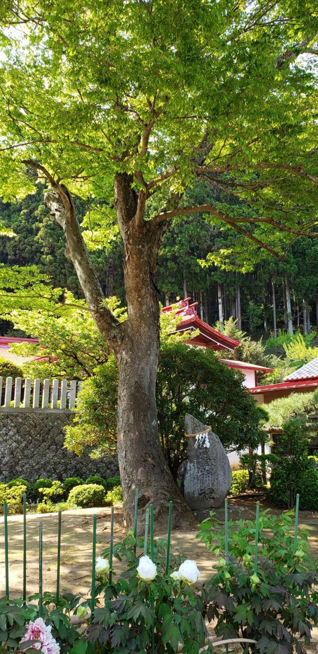 金蛇水神社の自然