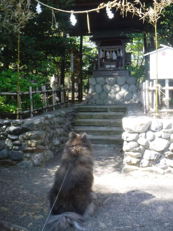 霊犬神社の動物