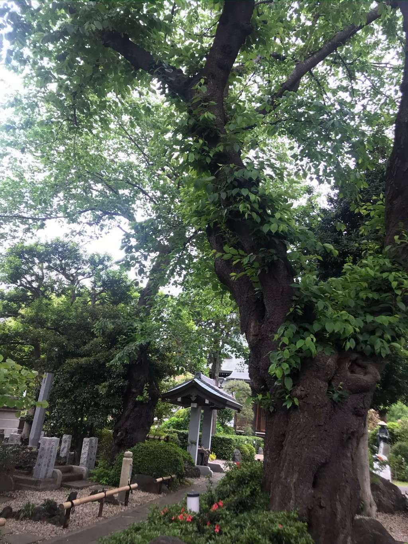 東覺院の自然