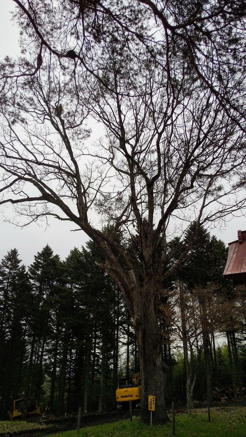 稲荷神社の自然