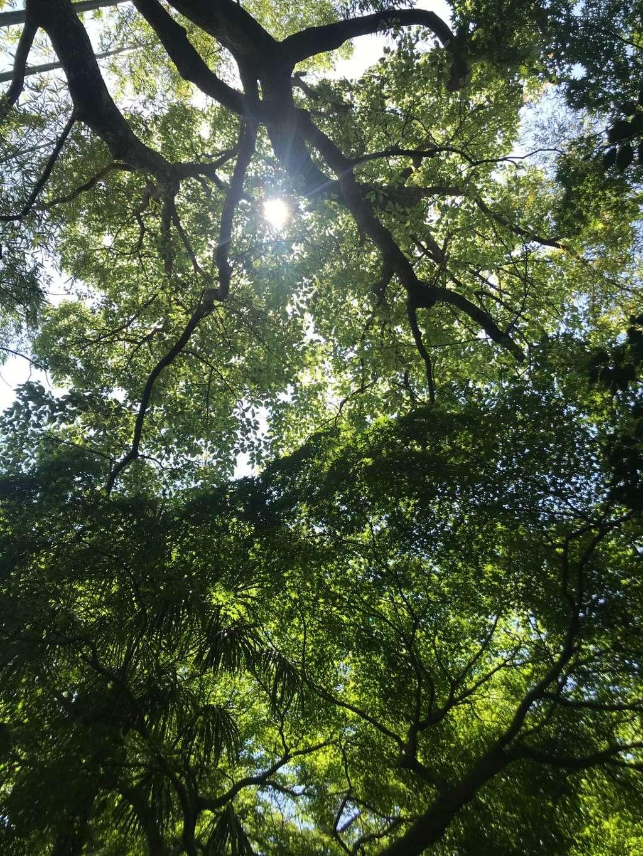 妙光院の自然